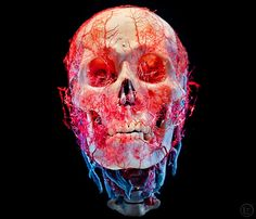 The soul is bone - Amazing photographs by James Bareham of The New...