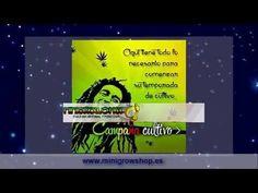 Sevilla  Cultivo de Canabis de Forma Positiva http://www.minigrowshop.es/