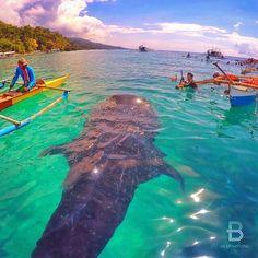 Oslob, Cebu, Philippines  By: @shervanz via @gmy_vintique ✨ Follow @Bellagio and…