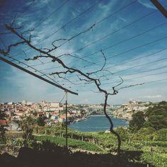 #p3top #douro #grahams by fredericovanzeller