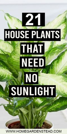 Not all plants need sunlight to grow well. There are many other greens which don. - Garden Care, Garden Design and Gardening Supplies Best Indoor Plants, Outdoor Plants, Indoor House Plants, House Plants Decor, Plants In The House, Outdoor Pallet, Home Garden Plants, Bonsai Garden, Balcony Garden