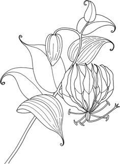 Flor de Peona Dibujo para colorear  Flores  Pinterest  Flor de
