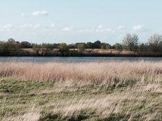My photo: Swinefleet River
