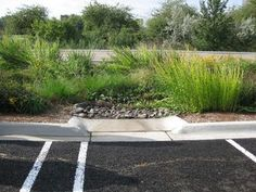 Bioswale for parking lot stormwater1