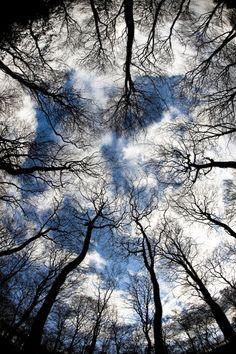 """mistymorningme: """" Trees by pnewbery """""""