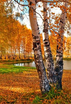 I need to visit the east coast to see the beautiful fall colors. Landscape Photos, Landscape Art, Landscape Paintings, Photo Background Images, Photo Backgrounds, Fall Pictures, Nature Pictures, Beautiful Pictures, Autumn Scenes