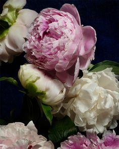 Flower Photograph No. 9374