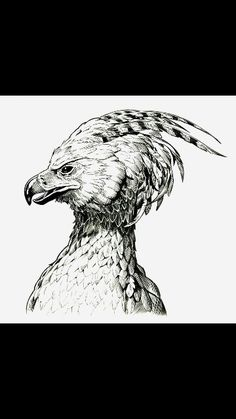 Art Drawings Sketches Pencil Harry Potter 47 Ideas For 2019 Harry Potter Sketch, Images Harry Potter, Harry Potter Tattoos, Harry Potter Drawings, Phoenix Drawing, Phoenix Art, Bird Drawings, Drawing Sketches, Tattoo Ideas