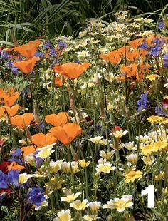 1. Keto kotipihalle Villi ja vapaa suuntaus tuo puutarhaan luonnonniittymäisen tunnelman. Kasvit muodostavat laajoja ja yhtenäisiä, kuin itsestään kylväytyneitä alueita. Tyylin suosikkeja ovat laihassakin maaperässä viihtyvät kirkkaan väriset yksivuotiset kylvökukat, kuten hilppa, kellohunajakukka, kaliforniantuliunikko, sauramo ja punapellava. Kalifornialaisesta maisemasta ja sen viinitiloista innoituksensa saaneen villikukkapuutarhan suunnitteli Kate Frey. 2. Romantiikka kukkii Ikisuositun