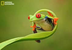I love frogs! :)