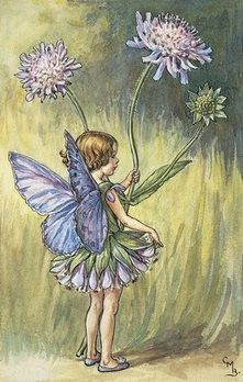 Cicely Mary Barker | The Scabious Fairy