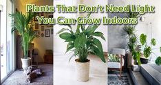 inside plants that don't need sun - 800×420