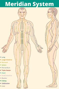There are 12 major meridians, which are associated with our body's major organs, and along these meridians are 350 acupuncture points. Each of these acupuncture points also correlates to an organ and more specifically, a particular function of that organ. Acupuncture Points Chart, Meridian Acupuncture, Acupuncture Benefits, Meridian Energy, Meridian Points, Body Pressure Points, Ayurveda, Body Chart, Acupressure Treatment