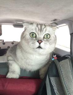 #brisk #cat