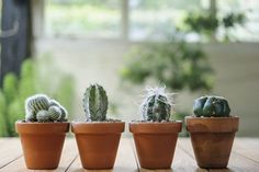 How to grow cacti from seed - Projects: Greenhouse and house plants - gardenersworld.com
