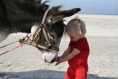 Het hele jaar door recreatieve ezelwandelingen met Puur Terschelling. Een ezel is een geweldige metgezel voor jong en oud tijdens een wandeling door onze schitterende natuur. Onze ezel draagt met liefde uw goed gevulde picknickmand en/of uw kind. Onze ezel is lief, aanhankelijk, leergierig, trouw, sterk en zeer slim... Veel mensen hebben helaas een ander beeld van een ezel. Lui, koppig, eigenwijs en vooral dom. Niets is minder waar. www.puur-terschelling.nl