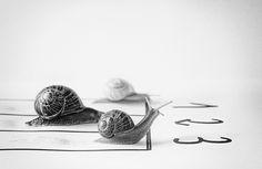 ¡Ultimo día para participar (31 de agosto)! en el XI Concurso de Fotografía El Foton elfoton.com #elfoton15 categoría #CreatividadFotografica suario: tomy (españa) - GANE - Tomada en burgos el 14/4/2015 #photos #travel #viajes #igers #500px #Picoftheday #Fotos #mytravelgram #tourism #photooftheday #fotodeldia #instatravel #contest #concurso #instapic #instaphotomatix #wanderlust #España #españa #burgos #caracol #snail #carrera #competición Hot Mess, Carrera, Pageants, Pageant Photography, Tomy, Exhibitions, Viajes, Creativity, Fotografia