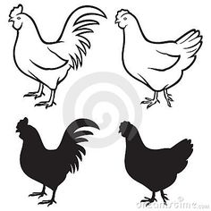 Rooster (cock) and chicken