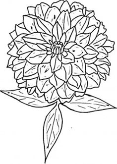 Flower Coloring Page Zinnia