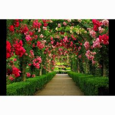 Flowered tunnel, this is amazing.