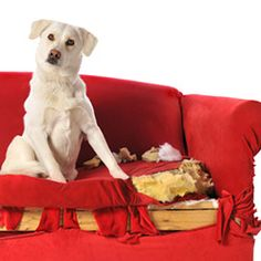 Protect our Pets from Toxic Flame Retardants
