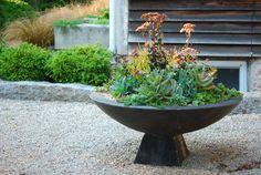 zenbowl.avant.sept13_72  article on how to dismantle a succulent arrangement for the winter