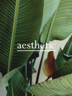 aesthetic design co