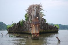 The Ghost Fleet of Mallows Bay. In a shallow bay of the Potomac River about an hour south of Washington, D.C., lie the remains of 214 wooden cargo ships from World War I, some of which have sprouted trees and become islands.