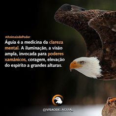 Gostou?deixe um  e siga nosso perfil para receber mais conteúdos de qualidade que realmente vão ajudar você a fazer ma... Good Night Image, Bald Eagle, Animals, Spiritism, Medicine, Profile, Animales, Animaux, Images For Good Night