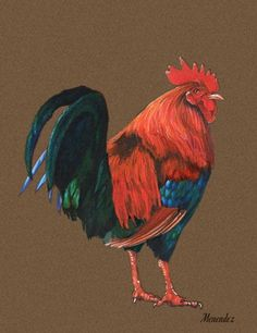 Creating Colored Pencil Art: Great Tips for Beginners, from Mark Menendez at ArtistsNetwork.com. #rooster #coloredpencil #art #drawing