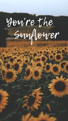Alienware Gadgets For Windows Wallpapers For Iphone Neon; Desktop Gadgets For Windows 10 Clock; Wallpaper For Iphone Xs Max Gold Sunflower Quotes, Sunflower Pictures, Sunflower Art, Cute Backgrounds, Phone Backgrounds, Cute Wallpapers, Iphone Wallpapers, Wallpaper Wallpapers, Tumblr Wallpaper
