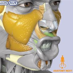 """74 Likes, 1 Comments - Anatomy Next (@anatomy_next) on Instagram: """"Anatomy of insanity :) #anatomy #zbrush #3dart #3dartist #anatomyclass #humananatomy #anatomynext…"""""""