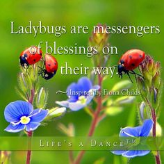 """Lady bugs are messengers of blessings on their way."" ~inspired by Fiona Childs"