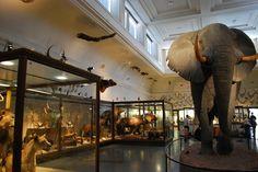 Gothenburg Natural History Museum