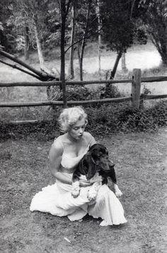 Marilyn Monroe en compagnie de son mari Arthur Miller , cueillant des fleurs et s'amusant avec Hugo , le chien...