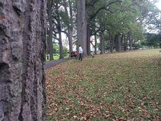 Love shooting outdoors. Elkins Estate in Elkins Pa