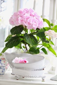 Pinked hydrangea planted on a white pot inside Hortensia Hydrangea, Hydrangea Garden, Pink Hydrangea, Pink Garden, Pink Peonies, Pretty In Pink, Pink Flowers, Beautiful Flowers, Pink Roses