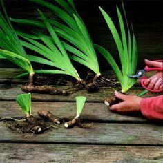14 fall garden tasks