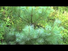 This video describes the differences between non-vascular and vascular plants. This video was created for a Teaching and Learning in the Digital Age assignme. Science Videos, Science Lessons, Science Activities, Culture Activities, Teaching Science, Science Cells, Plant Science, Science Nature, Life Science