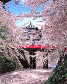 2014년 일본 벚꽃 개화, 만개 예상 일정