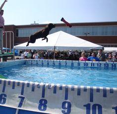 Kada the dock diving dog!