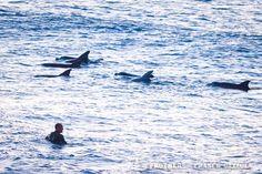 Dolphins at Bondi Beach this morning 7 Aug 2012 Bondi Beach, Oceans, Good Vibes, Dream Life, Dolphins, How To Fall Asleep, Swimming, Animals, Swim