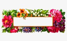Borde rojo,Flores rojas,Borde rosa,Flores de color rosa,Flores frontera
