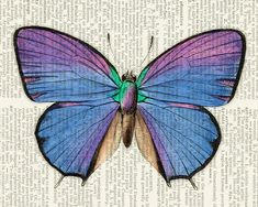 butterfly - vintage blue butterfly printed on old dictionary page