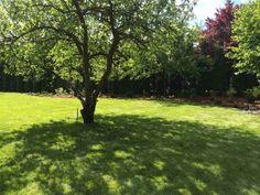 Modernizacja starego ogrodu. #projektowanie ogrodów, #hurtownia kamienia, #projektowanie ogrodów Toruń, #projektowanie ogrodów Bydgoszcz, #ogrody Toruń, #ogrody Bydgoszcz