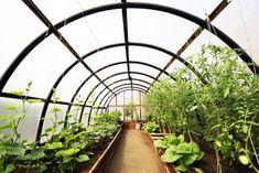 DIY : une serre de jardin fait maison | Gamm vert Greenhouse Interiors, Image Categories, Organic Vegetables, Garden Bridge, Outdoor Structures, Stock Photos, Diy, Products, Gardens