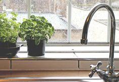蚊が嫌いな「8つの植物」意外と知られてないかも? | TABI LABO Foliage Plants, Herb Garden, Cleaning, Interior, Home Decor, Medium, Balcony, Gardening, Life
