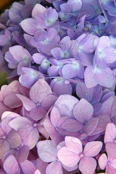 Pastel Purple Flowers