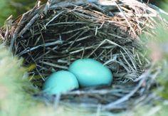 Home sweet nest