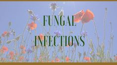 Information on the health properties, active Ingredients, benefits and side effects of medicinal herbs as herbal remedies to treat fungal infections Natural Cancer Cures, Natural Remedies For Anxiety, Natural Cures, Natural Healing, Anxiety Treatment, Cancer Treatment, Allergy Remedies, Recipes
